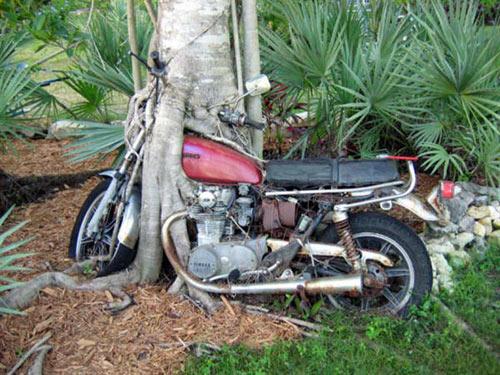 Bike-in-tree