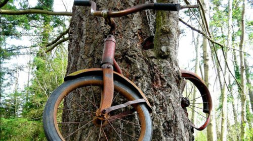 The tree that rode a bicycle